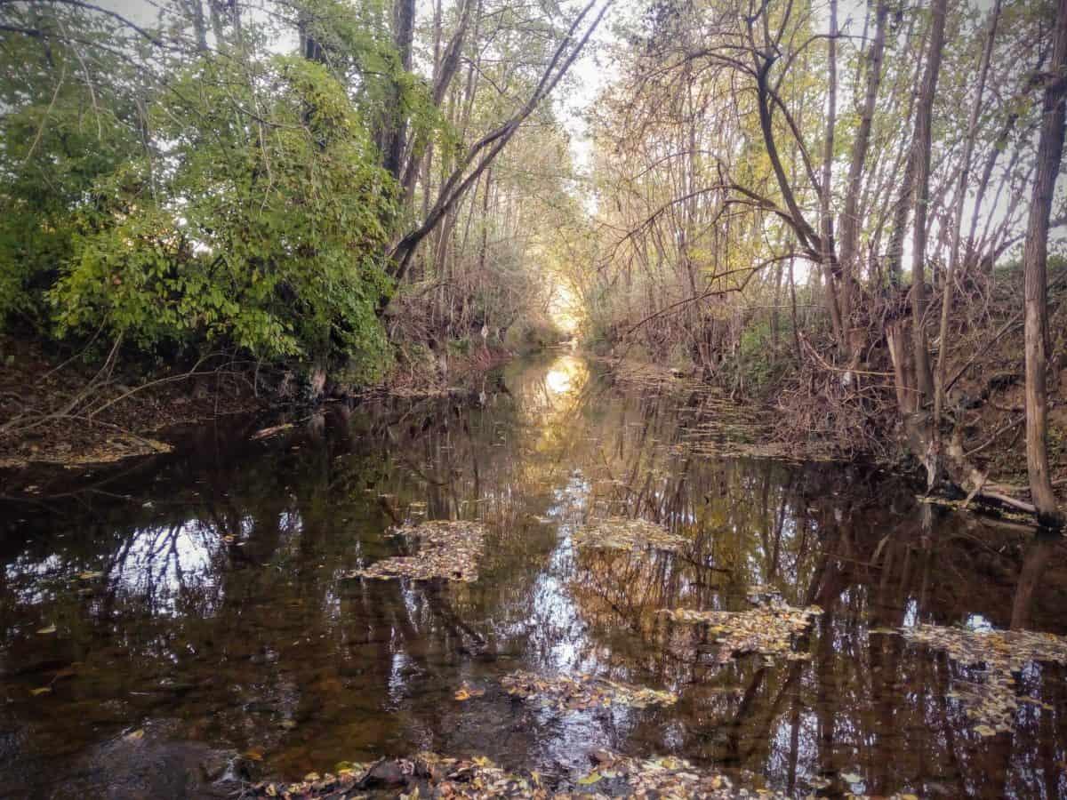 reka Dicina